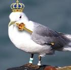 Le Roi des Mouettes
