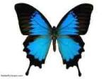 ButterflyLiz