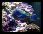 Les poissons 295-43