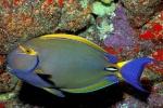 Les poissons 515-96