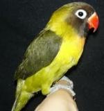pticar