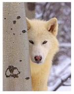 Wolfy75