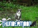 ThunderMoon