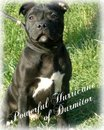 kennel charming site