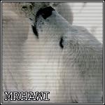 mrhawi