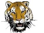 tigerjazz