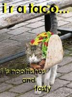 Zesty Taco