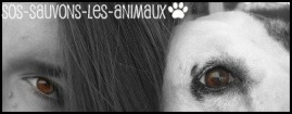 SOS-SAUVONS-LES-ANIMAUX