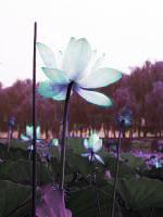 Lotus <BANNED>