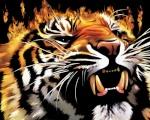 ll_-TIGER-_ll