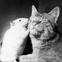 Cats N'Bats