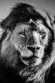Le règne animal 173-31