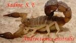 mr.scorpion