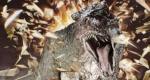 tarboraptor