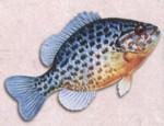Vos parties de pêche 442-96