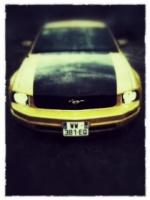 Yellowmustang