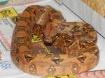 python69