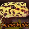 geckoholik