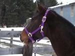 oldladynewhorse