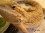 Reptiles-x3