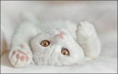 katiane