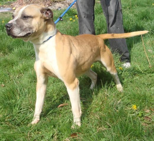 Fritz - 5 year old male Terrier Cross