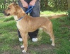 Hobo - 2-3 year old male cross-Breed