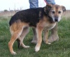 Lola is a nice natured girl who adores people & is even fine around younger children.  Lola is house-trained & is happy to be left alone for a few hours. Lola is is neutered, part vac'd, chipped, wormed & frontlined   To find out more about Lola please go to Mill rescues website here http://www.millrescue.co.uk/  To read her thread please click on the following link https://animallifeline.forumotion.net/rescue-animals-looking-for-homes-f34/lola-shep-x-t600.htm