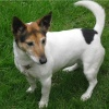 Type/Breed/Variety: Terrier x