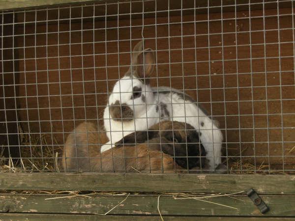 Treacle & Thumper - Friendly Bunnies!
