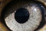 Eagle Eye307