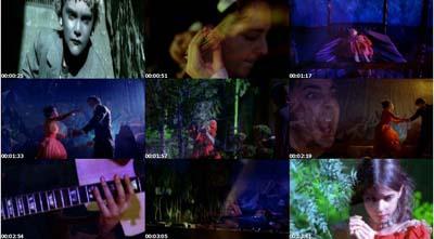 SOAD Videography Questi11