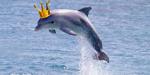 leaderofdolphins