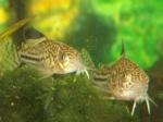 Matériel aquariophile 12-76