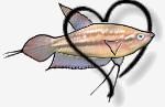 Matériel aquariophile 34-99