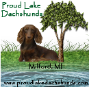 Proud Lake Dachshunds
