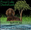 Proud Lake Dachshunds