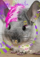 Emo Chinchilla
