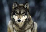 silverwolf1990