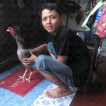 ayam pemula