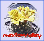mexicovalley