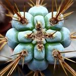 Aloe 2842-8