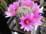 Kaktus25