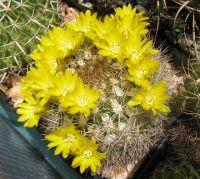 Pflanzenbestimmung 5964-50