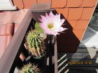 Pflanzenbestimmung 6748-1