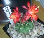 Euphorbia 840-86