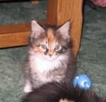 Wildcat WendyB
