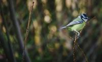 Comptage d'oiseaux de tous milieux 241-10
