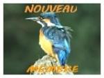 Autres animaux sauvages Nouvea15