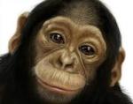monkey121